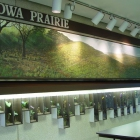 Iowa Prairies